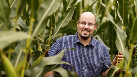 person in corn field
